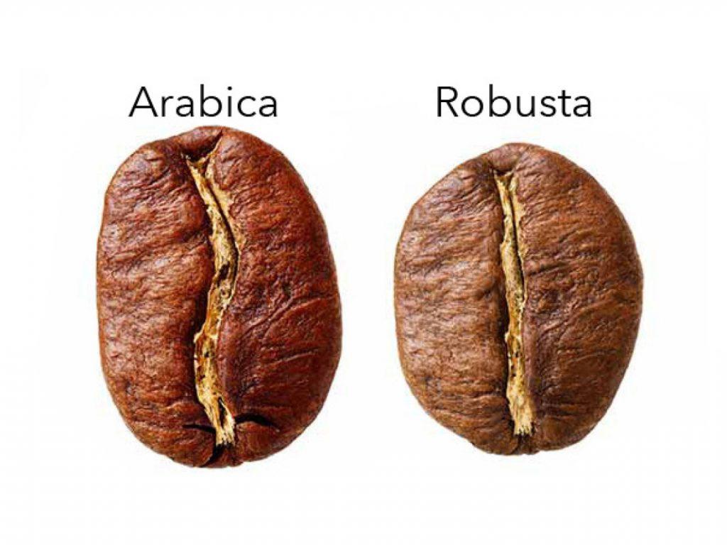 อราบิก้า (Arabica) กับ โรบัสต้า (Robusta)